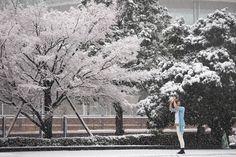 冬の雪景色は魅力的、降りしきる雪の中に飛び出して写真を撮る。  Fuyu no yukigeshiki wa miryokuteki, furishikiru yuki no naka ni tobidashite shashin wo toru.  Pemandangan salju di musim dingin begitu menarik, melompat keluar ke dalam salju yang turun lebat dan mengambil foto.