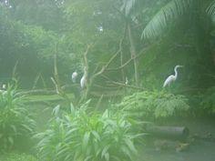 Amazon Rainforest - Rain Forest Animals - Tropical Rainforest Plants