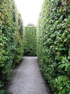 The best type of evergreen privacy hedge is a dense barrier to sight, sound and wind, fast-growing to the height you want it to reach and low-maintenance. Most evergreens used for hedging meet these criteria, although there are poor choices, too. Privacy Hedges Fast Growing, Shrubs For Privacy, Privacy Trees, Garden Privacy, Backyard Privacy, Privacy Fences, Landscaping Shrubs, Backyard Pool Landscaping, Backyard Ideas