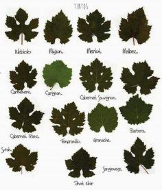 variedad hojas #wine#vino