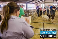 For those who aren't just honing their showmanship skills, sign up for our Junior Livestock Judging Contest! 4-Hers and FFAers, apply here.