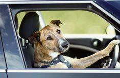 Dogs driving MINI? True story!