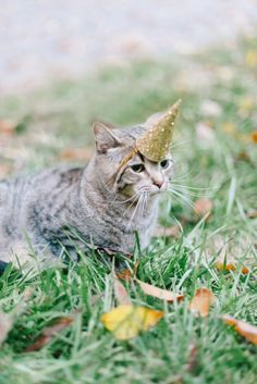 Cat in a Unicorn Hat / Laura Gordon Photography