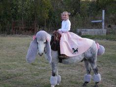 humiliation d'un cheval, publiée le 13 Janvier 2013