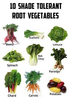 101 Gardening: 10 Shade tolerant root vegetables #vegetable_gardening