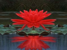 <3 Red Lotus: This signifies the original nature and purity of the heart (hrdya). It is the lotus of love, compassion, passion and all other qualities of the heart. It is the flower of Avalokiteshvara, the bodhisattva of compassion.