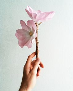 DIY Waxed Paper Magnolia Branch | Elise Dee for Design Sponge
