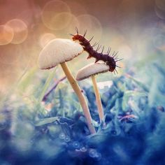 The Magical Macro World Of Tiny Creatures That I Capture In Indonesia