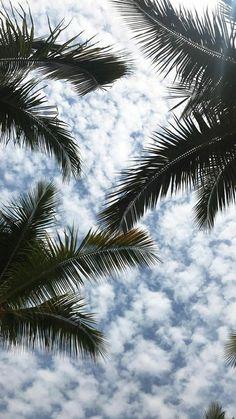 Palms wallpaper background sea ocean beach - background Beach ocean Palms s. Tree Wallpaper Backgrounds, Palm Wallpaper, Trendy Wallpaper, Kawaii Wallpaper, Aesthetic Iphone Wallpaper, Cute Wallpapers, Aesthetic Wallpapers, Tropical Wallpaper, Wallpaper Samsung