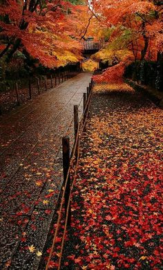 Autumn in Komyo-ji Temple, Nagaokakyo, Kyoto, Japan. I LOVE Kyoto! Beautiful Places, Beautiful Pictures, Amazing Photos, Autumn Scenes, Seasons Of The Year, Fall Pictures, Fall Pics, All Nature, Belle Photo