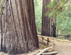 Must hike: the #heritagegrove trail between #sanjose and #highway1 in #california #travel #holishay #callyforniacation Thanks for the recommendation @tyler.travels