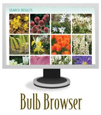 Bulb Browser - explore flowering bulb varities