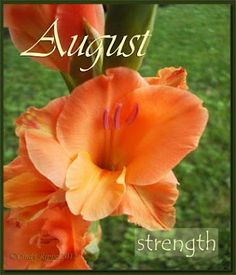 Cindy Rippe Artist Fls Family Faith August Flower Of The Month Gladiola