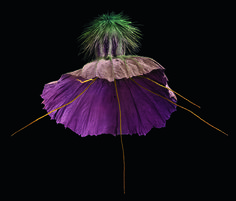 Rob Kesseler, Scabiosa crenata, a hand-coloured scanning electron micrograph (SEM). (Photo: Collection of Rob Kesseler/ Courtesy Plant: Exploring the Botanical World, Phaidon 2016)