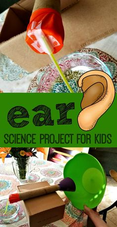 Ear Anatomy Science Project - This is such a fun easy to make science project for kids to learn about the human body (homeschool science fair human body experiments kindergarten first grade grade grade grade grade 5 senses) Sound Science, Science Biology, Preschool Science, 4th Grade Science, Elementary Science, Science Education, Science For Kids, Science Classroom, Physical Science