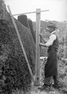 I wish I had him around to make sure my hedges were even - those were the days when gardeners did it all by hand!