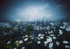 Field of Flowers by Marius Kastečkas - Photo 161972331 - 500px