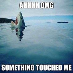 awesome 28 Funny Animal Pictures | Love Cute Animals - dezdemon-humor-addiction.xyz