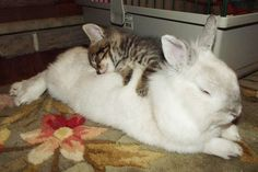 unlikely-sleeping-buddies-animal-friendship-36__605