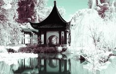 Chinese Winter Garden: What Li-an saw when she looked out her window on the first morning we met her. by muerdecabras