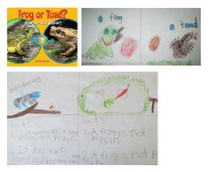 Nonfiction text features: Comparing characteristics of a frog and toad (top) Frog fact boxes (bottom) Based on Frog or Toad? by Melissa Stewart. Created by a K students in Mrs. Teany's class at Memorial School in Medfield, MA.