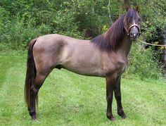 River Jordan - Stallion Directory