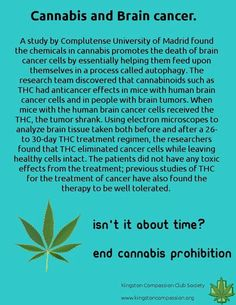 Cannabis...pin and share this excellent news! join our board ---> | #1Cure4Cancer | www.mcutcorep.com/JamesTaylor