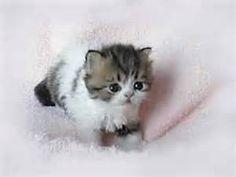 Bing Cute Kittens - Bing Images