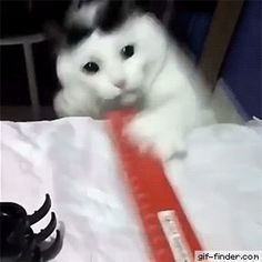 Overly Dramatic Cat | Gif Finder – Find and Share funny animated gifs