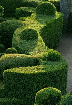 curvy hedge with bobbles