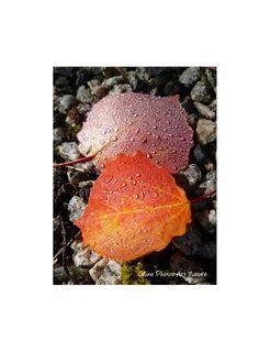 Poster 80x60cm à partir d'une photographie de Céline Photos Art Nature de feuilles d'automne. : Photos par celinephotosartnature Celine, Posters, Nature, Photos, Etsy, Art, Leaves, Fall Season, Photography