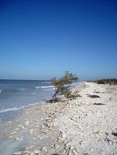 Honeymoon Island, Florida north rocky shore with good shelling Florida Sunshine, Sunshine State, Sterling Scotland, Honeymoon Island, Sister Cities, Rocky Shore, North Beach, Old Florida, Island Life