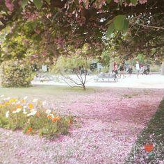 Beautiful World, Dolores Park, Garden, Flowers, Travel, Voyage, Garten, Viajes, Traveling