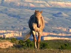 Cloud: Wild Stallion of the Rockies - Introduction - Wild Horses | Nature | PBS