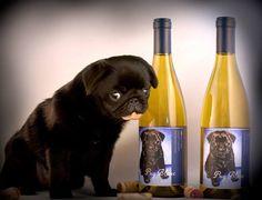 Black pug & white wine