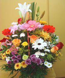 Bela Flores - A magia no Ar!