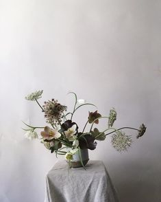 sparse flowers with queen anne's lace