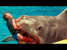 Sharks are terrifying creatures and are undoubtedly apex aquatic predators. We're no match for sharks in their natural habitat and these 10 worst shark attac.