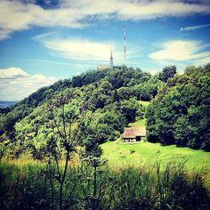 View of Uetliberg//Blick auf den Uetliberg #zurich #zurichspots #walk #swissspots #switzerland