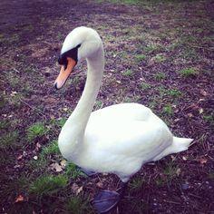 Hampstead Heath-very mean animals!