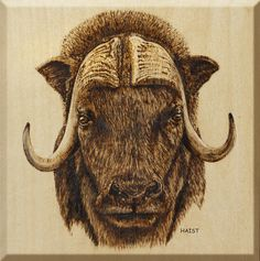 This is a 10''x 10'' wood panel with Pyrography (wood burning) of the Muskox