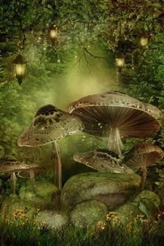 Underneath the Toadstool......
