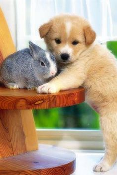 I'm not much for posed animal pictures as they're so darn cute naturally, but these two deserve a Pin. Cute bunny  puppy. Awwww.