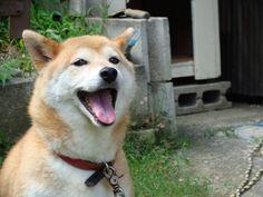 【画像あり】うちの犬が可愛すぎてヤバイ / 流速VIP