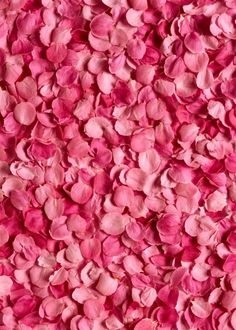 12.00$  Buy now - http://ali49f.shopchina.info/1/go.php?t=32795966822 - 8 ft Vinyl print cloth  pink flowers petals photography backdrops for wedding photo studio portrait background props S-965  #buyonlinewebsite