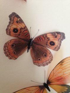 3 Luxury Life Like  Orange & Brown Butterflies 3D  Butterfly Accessories Wall Art