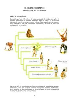 ETAPAS DE LA EVOLUCION Y DESARROLLO DEL SER HUMANO.