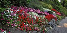 De rette plantene for bratte skråninger.