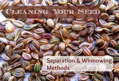 Once you have harvested and fully dried your seeds you'll need to separate the seeds from their pods or... Threshing seeds involves rubbing, flailing...