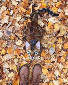 """8,926 Beğenme, 59 Yorum - Instagram'da ART SHARING PAGE (@exploring.artists): """"Autumn camouflage  Yes or no? Shared by @colour4art By @sukiicat Tag your friends!…"""""""
